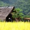 Thailand_02_37.jpg